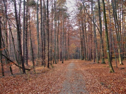 Rezerwat Modrzewiowa Góra